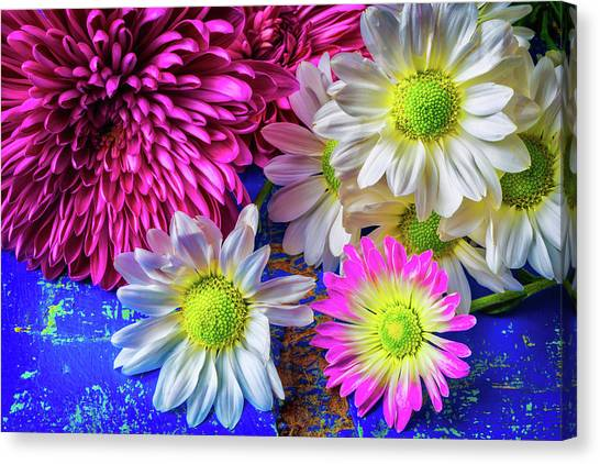 Pom-pom Canvas Print - Mums And Daises by Garry Gay