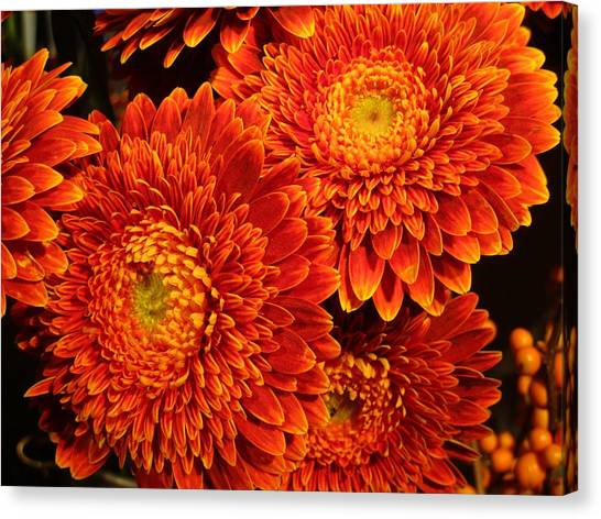Mums In Flames Canvas Print