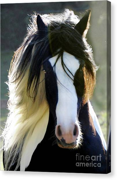 Canvas Print featuring the photograph Murphy by Melinda Hughes-Berland