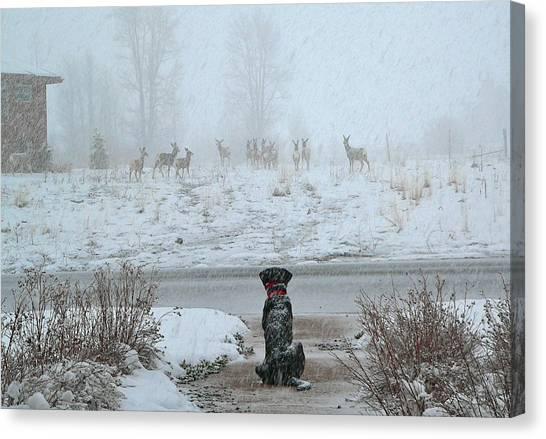Murphy Watches The Deer Canvas Print
