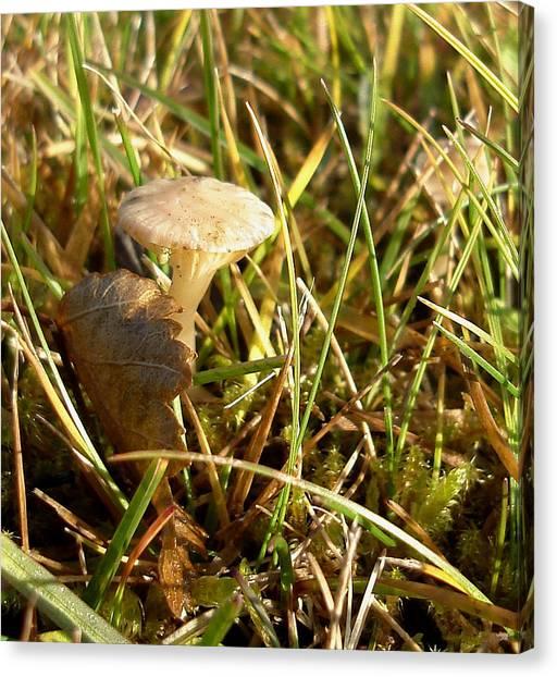 Mushroom And Leaf Canvas Print