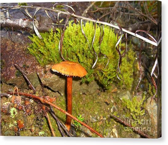 Mushroom Microcosm Canvas Print by Jim Thomson