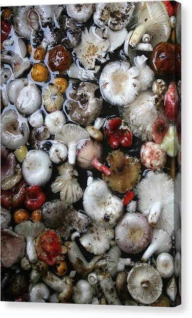 Mushrooms In Thailand Canvas Print