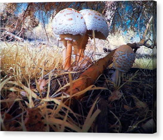 Canvas Print featuring the photograph Mushrooms In The Grass by Chriss Pagani