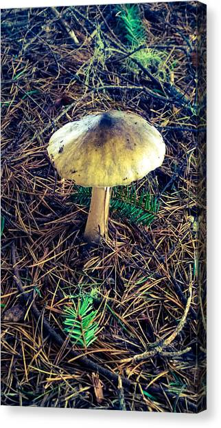 Mushrooms Of Oregon Canvas Print