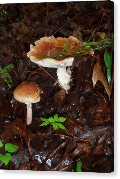 Mushrooms Rising Canvas Print