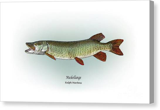 Angling Art Canvas Print - Muskellunge by Ralph Martens