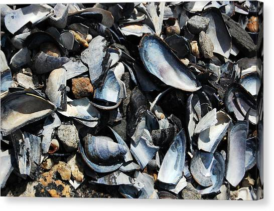 Mussel Shells Canvas Print by Rebecca Fulweiler