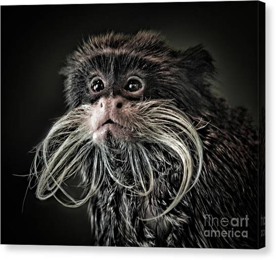 Mustache Monkey IIi Altered Canvas Print
