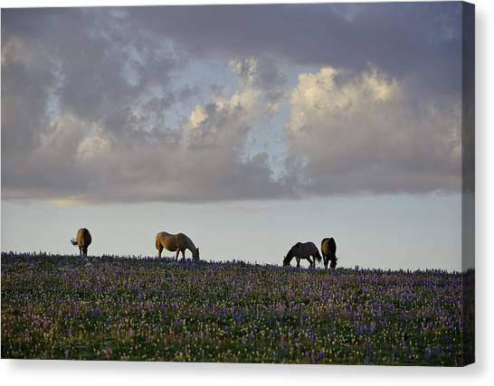 Mustang Group 17 Canvas Print