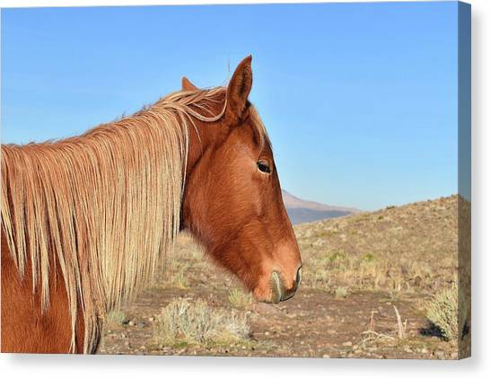 Mustang Mare Canvas Print