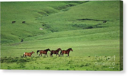 Mustangs Of The Flint Hills Canvas Print