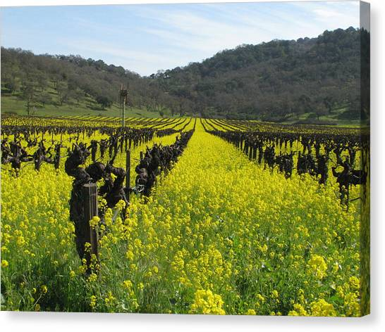 Mustard In The Vineyards Canvas Print