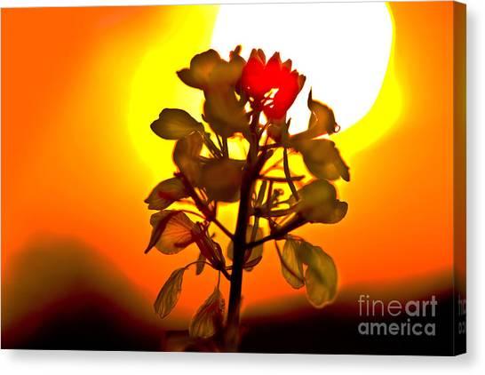 Mustard Sunset Canvas Print