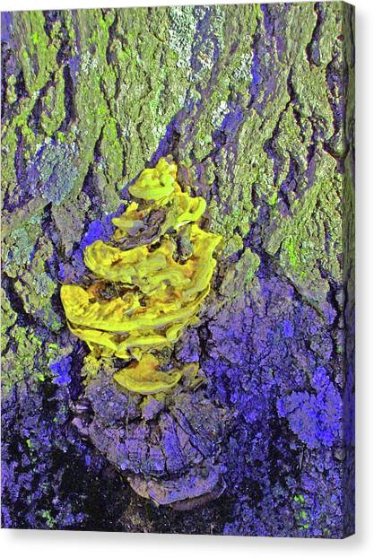 Northeastern University Canvas Print - Mutated Fungi by Mary Ann Weger
