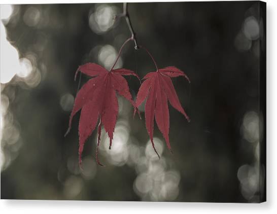 Muted Fall Colrs Canvas Print
