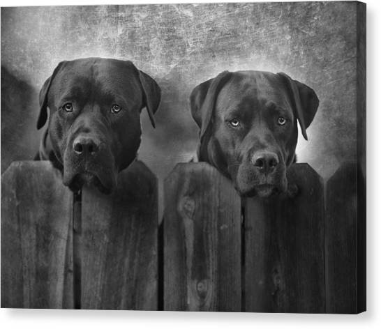 Pitbulls Canvas Print - Mutt And Jeff by Larry Marshall