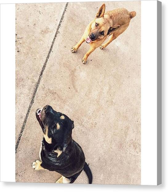 Rottweilers Canvas Print - My Babies Needed Some Attention by Anna Woodard