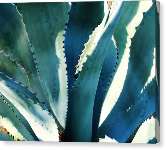 My Blue Agave Canvas Print
