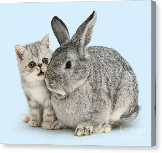 My Bunny Little Friend Canvas Print