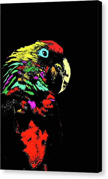 My Colorful Mccaw Canvas Print