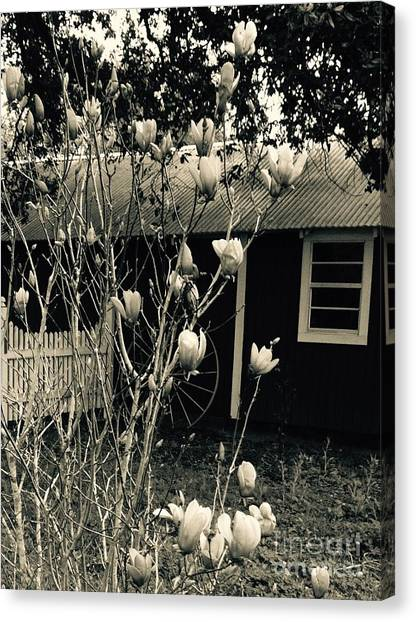 My Daughters Magnolia Canvas Print