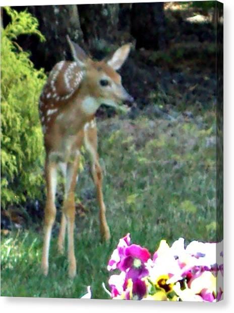 My Deer Friend...... Canvas Print