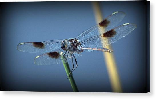 My Favorite Dragonfly Canvas Print