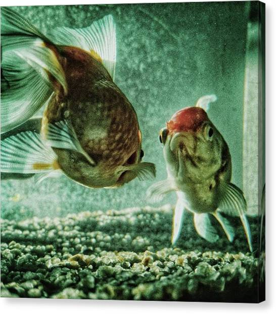 Fish Canvas Print - My Fish #fish #aquarium #pets #animals by Rafa Rivas