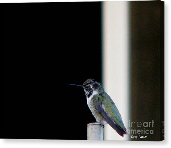 My Friend Stop By Canvas Print by Greg Patzer