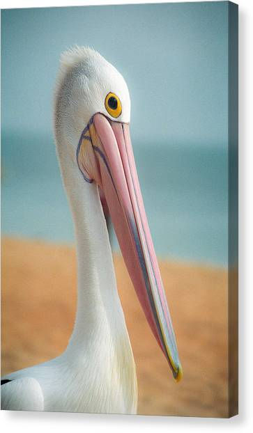 Canvas Print featuring the photograph My Gentle And Majestic Pelican Friend by T Brian Jones