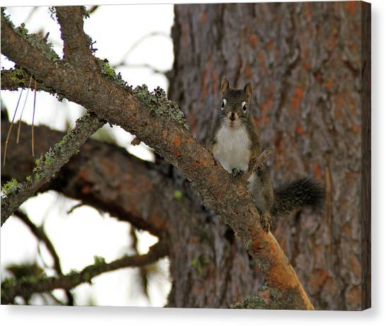 Boise National Forest Canvas Print - Your Little Friend  by Ed  Riche