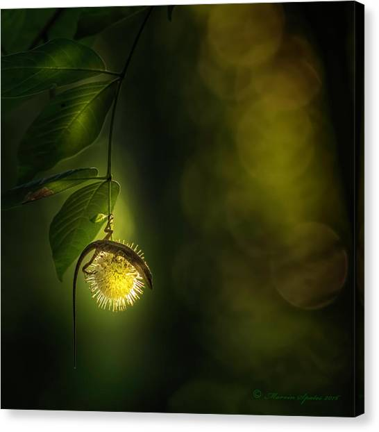 Florida Wildlife Canvas Print - My Little World by Marvin Spates