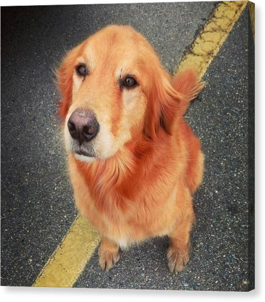 Golden Retrievers Canvas Print - My Long Lost Buddy by Haley Marie Theoboldt