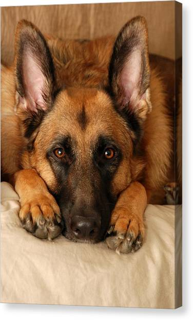 German Shepherds Canvas Print - My Loyal Friend by Angie Tirado