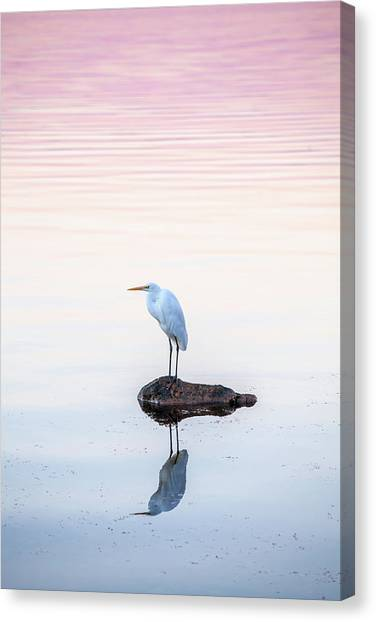 Water Birds Canvas Print - My Own Private Island by Az Jackson