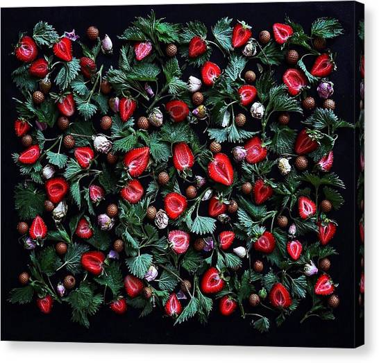 My Real Strawberry Patch Canvas Print