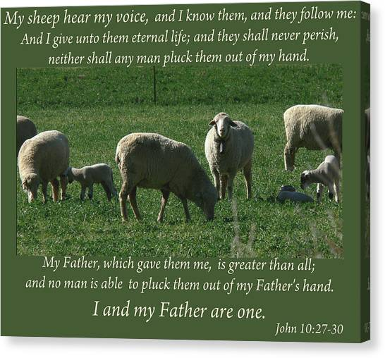 My Sheep Hear My Voice Canvas Print