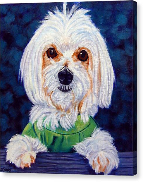 Maltese Canvas Print - My Sweater - Maltese Dog by Lyn Cook