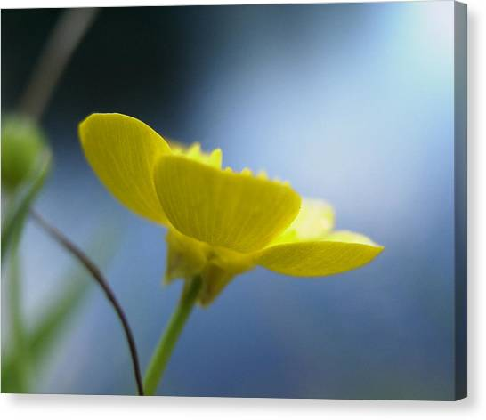 My Sweet Buttercup Canvas Print