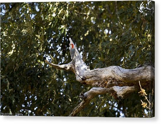 Woodpeckers Canvas Print - My Wild Garden II by Andre Saraiva Macedo