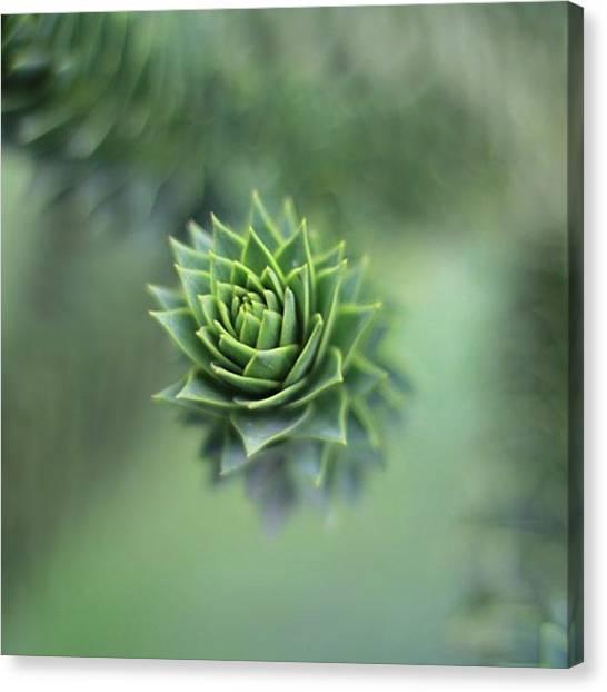 Fibonacci Canvas Print - Myddleton House Gardens No.3  I Have by Kat Hood