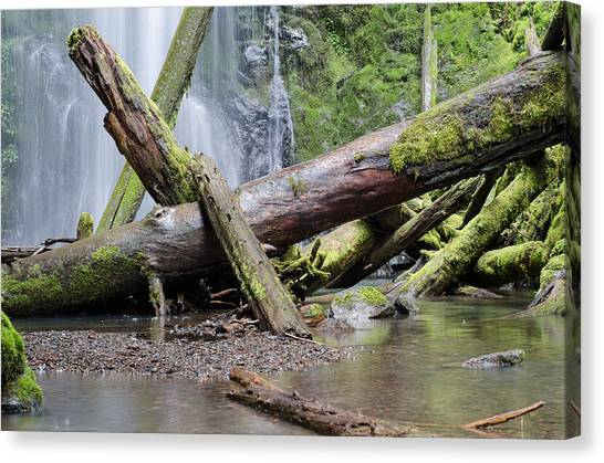University Of Oregon Uo Canvas Print - Mysteries In The Rainforest by Margaret Pitcher