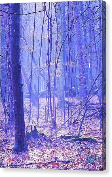 Canvas Print - Mysterious Forest by Slawek Aniol