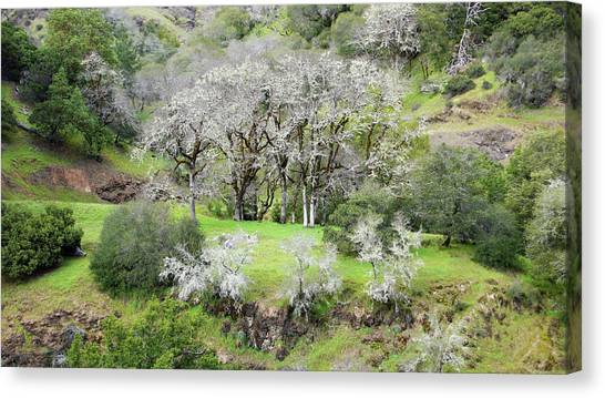 Mysterious Landscape In Sonoma County Canvas Print