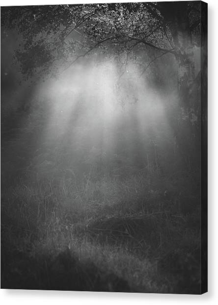 Sherwood Forest Canvas Print - Mystery by Chris Dale