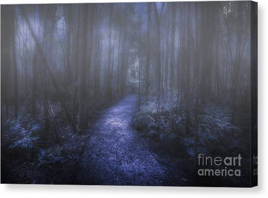 Murky Canvas Print - Mystery Pathway by Jorgo Photography - Wall Art Gallery