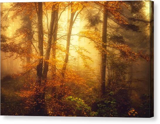 Mystic Fog Canvas Print