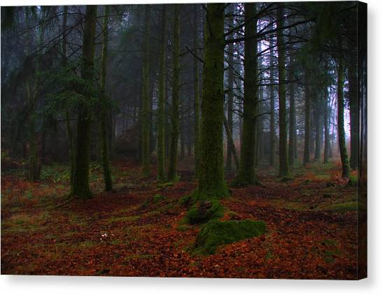 Mystic Forest Canvas Print by Paulo Antunes
