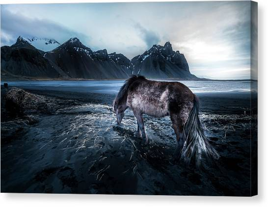 Reindeer Canvas Print - Mystic Icelandic Horse by Larry Marshall
